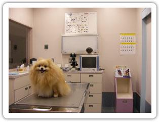みなと動物病院photo